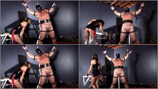 Cock Torture – CBT and Ballbusting – Helpless and Beaten –  Mistress Dahlia